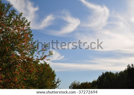 Autumn sky landscape setting with trees and a blue sky