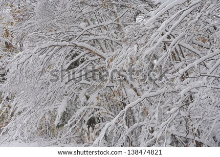 Autumn snow covered trees on Rte. 108, Stowe, Vermont, USA - stock photo