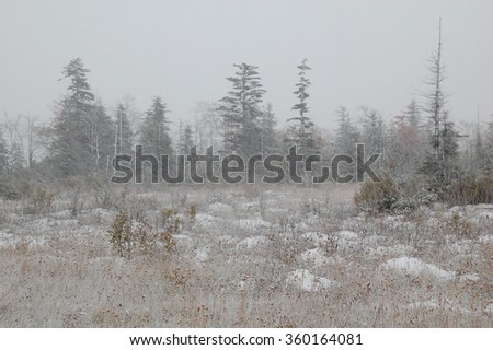 Autumn snow in Canaan Valley, West Virginia - stock photo