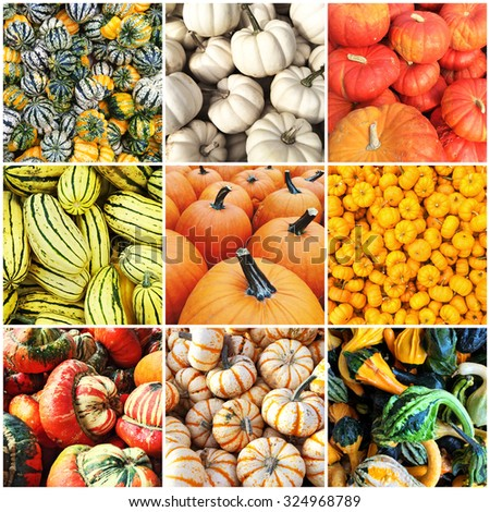 Autumn squash varieties. Collage of nine photos. - stock photo