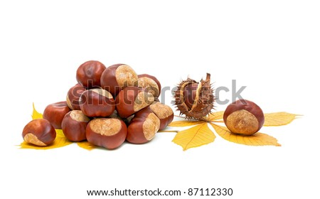 Autumn still life - fruit and leaves of chestnut on white close-up.