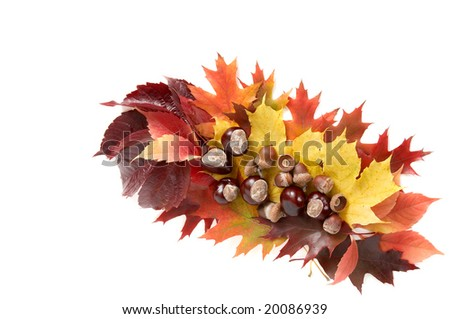 Autumn still life isolated on a white background.