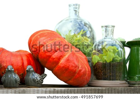 Autumn still life with harvested pumpkins, glass jars with plants and ceramic birds