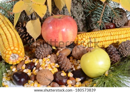 Autumn still-life with large group of products like apple, corn,  hazelnut, chestnut and more