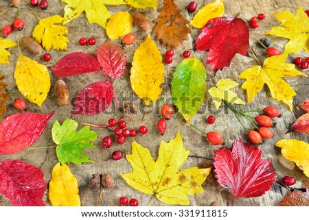 Autumn still life with leaves and berries with water