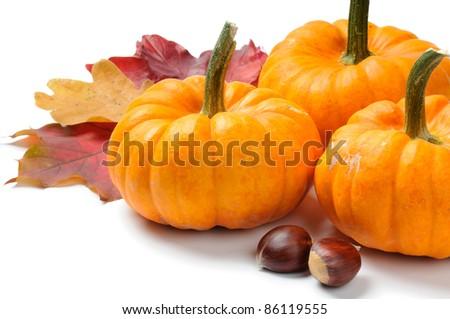 Autumn still-life with pumpkins - stock photo