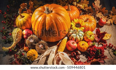 Autumn still life with pumpkins, corn cobs and berries on wooden background