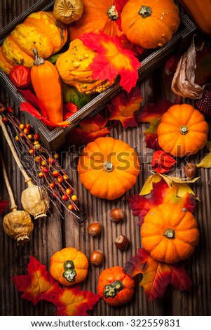 Autumn still life with pumpkins for Thanksgiving and Halloween - stock photo