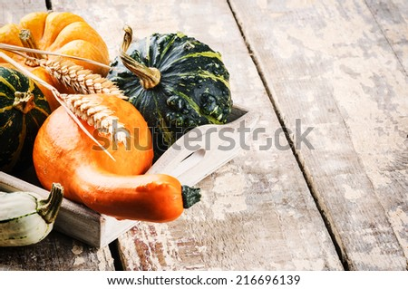 Autumn still-life with pumpkins on old wooden background - stock photo
