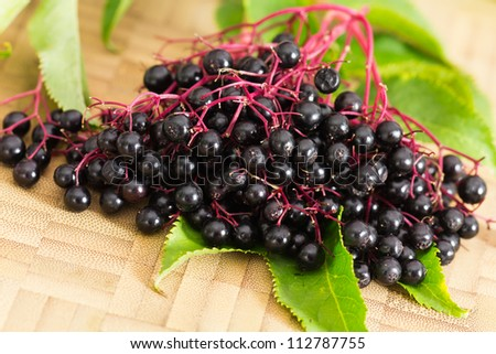 Autumn Still-Life with ripe black Elder Berries - stock photo
