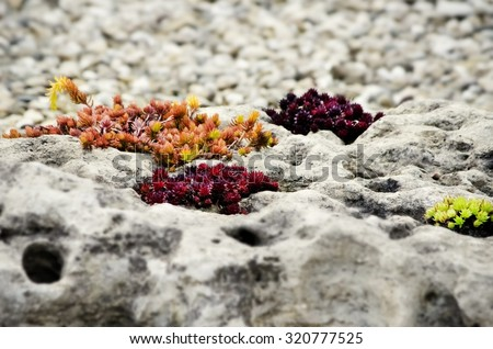 Autumn Stone Gardening With Different Color Plants - stock photo