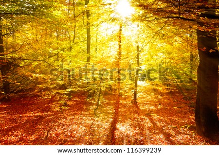 Autumn sunlight in the deciduous forest - stock photo