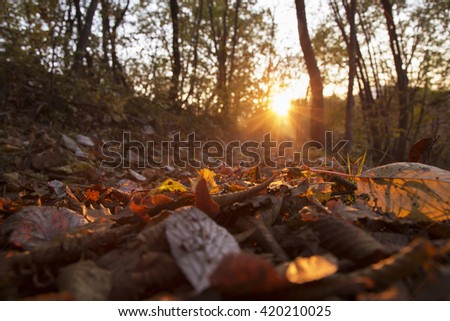 Autumn sunlight trough colorful leaves viewed from below