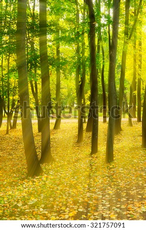Autumn sunny landscape - sunset in the autumn park with bright rays of light, soft focus processing - stock photo
