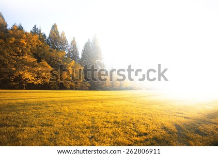 Autumn sunny meadow with a big bright light - stock photo