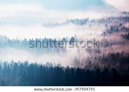 Autumn sunrise forest in a beautiful mountain within inversion. Treetops  increased from foggy background. Vivid effect. - stock photo