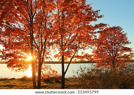 Autumn sunset near river with maple trees - stock photo