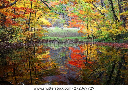 Autumn Swamp. Protected wetlands and colorful autumn forest bathed in golden light with beautiful reflections on smooth water, In Tsutanuma, Towada Hachimantai National Park, Aomori, Japan - stock photo