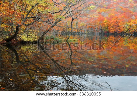 Autumn swamp scenery with beautiful foliage reflected on smooth water. Protected wetlands bathed in golden light in Tsuta marsh, Towada Hachimantai National Park, Aomori, Japan. - stock photo