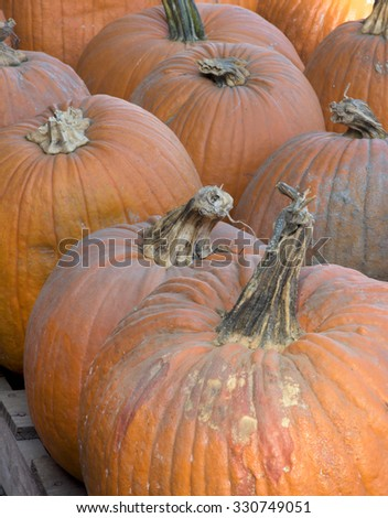 Autumn, Thanksgiving, Halloween Pumpkins - stock photo