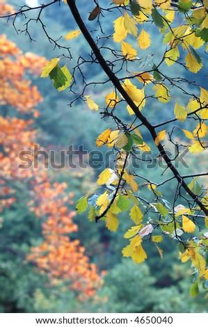 autumn theme - stock photo