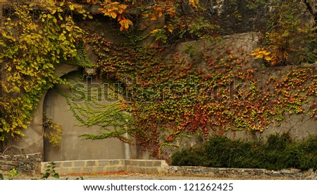 Autumn time: Old wall with ivy plant - stock photo