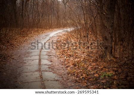 Autumn trail - stock photo