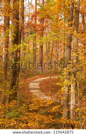 Autumn Trail Curve Through The Woods - stock photo