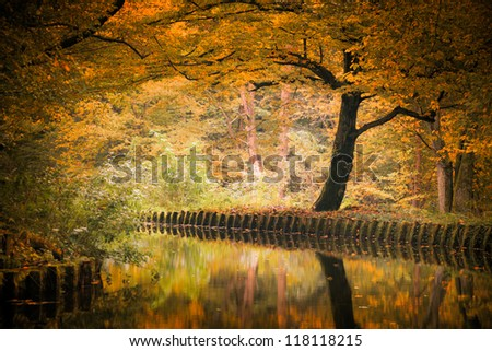 autumn tree - stock photo