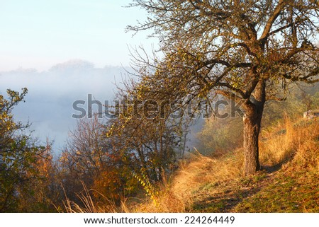 Autumn tree and river in fog, nature
