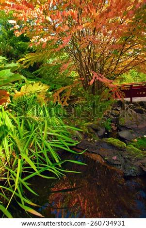 Autumn tree at the Chinese park reflected i n the water. Royal Botanic Garden, Edinburgh, Scotland - stock photo