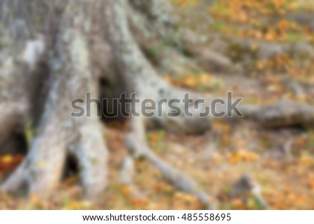 autumn tree, defocus
