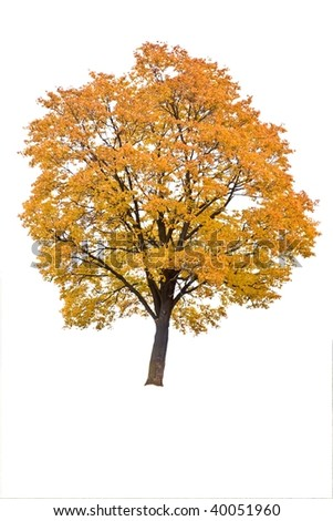 autumn tree in a white background  on field - stock photo