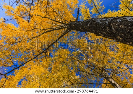 Autumn tree on a background of blue sky - stock photo