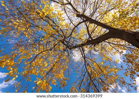 Autumn tree with blue sky. Seoul,South korea. - stock photo