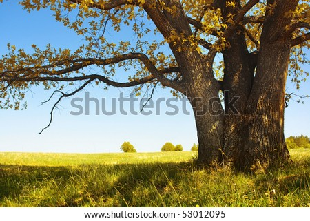 Autumn tree with leaves and dry grass and clear blue sky - stock photo