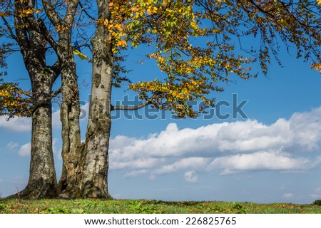 Autumn tree with leaves on blue sky background - stock photo