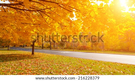 Autumn tree with yellow fall leaves in scenic park - stock photo