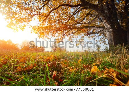 Autumn tree with yellow leaves and blue sky