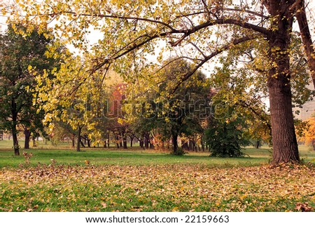 autumn tree with yellow leaves in park landscape