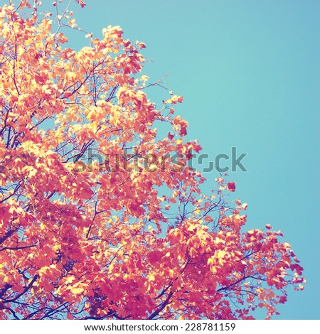 Autumn tree with yellow leaves over blue sky