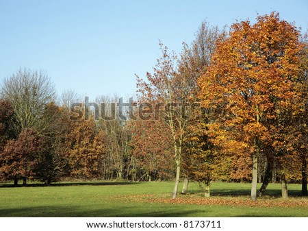 Autumn Trees. - stock photo