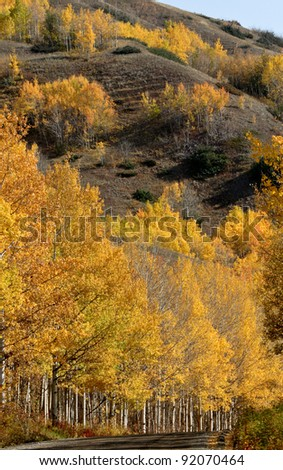 Autumn trees along a mountain road in British Columbia - stock photo