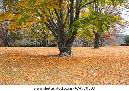 autumn trees and fallen leaves on the ground