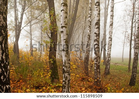 Autumn trees and fog - stock photo