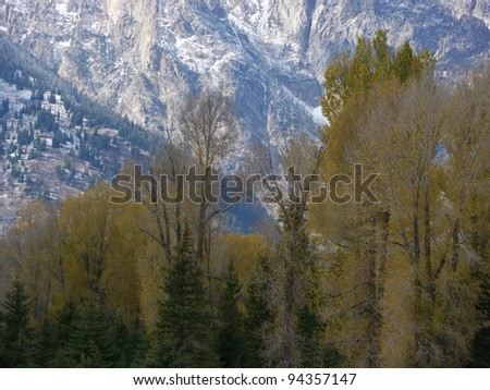Autumn trees backdropped by snowy mountains