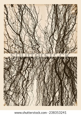 Autumn trees collage / Crossed Branches / Isolated tree - stock photo