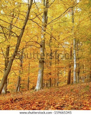 Autumn trees colored in yellow and fallen leaves