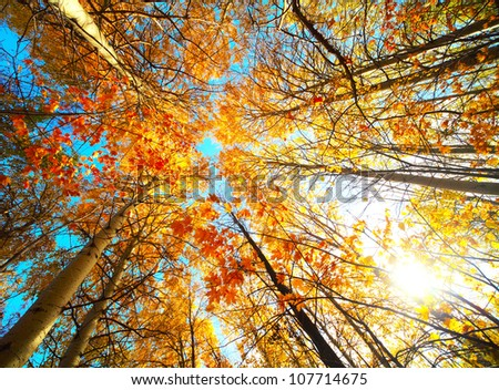 Autumn trees in a forest and clear blue sky with sun - stock photo