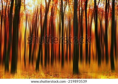 Autumn trees in forest with motion effect.  - stock photo